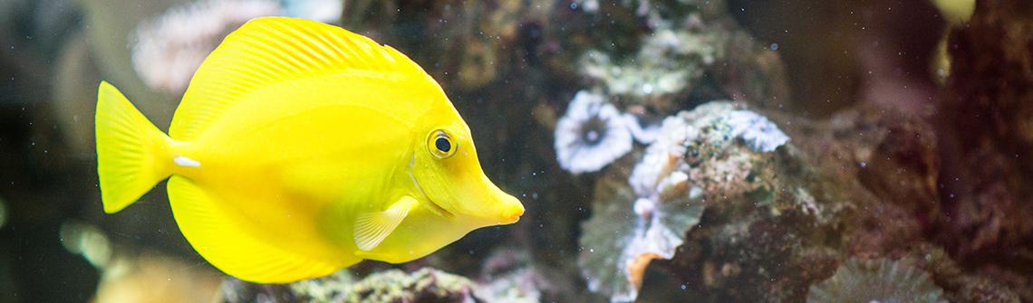 Meerwasseraquarium in der Kinderklinik Tübingen